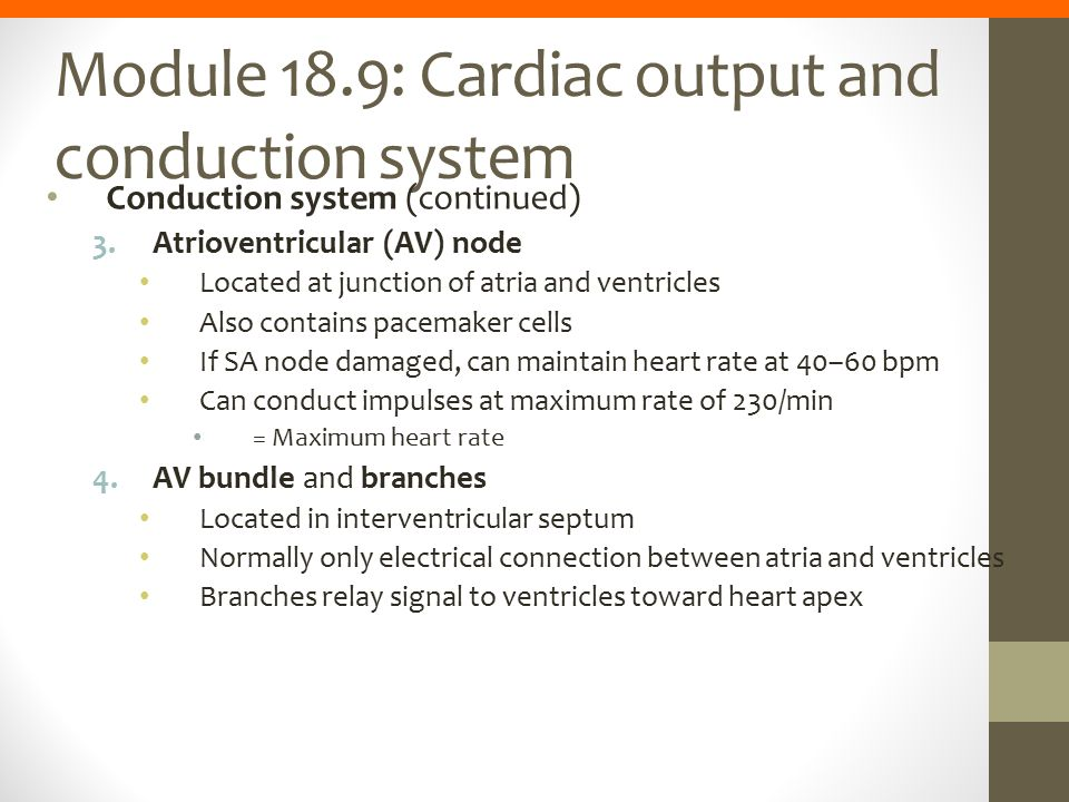 Module 18.9: Cardiac output and conduction system Conduction system (continued) 3.Atrioventricular (AV) node Located at junction of atria and ventricl