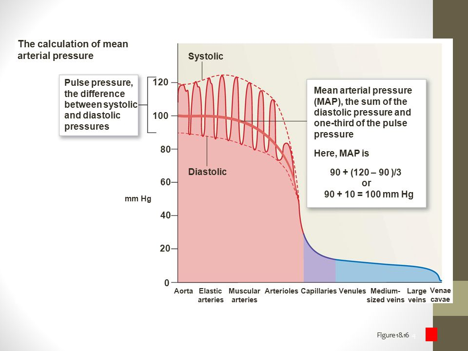 Figure 18.16 4 The calculation of mean arterial pressure Pulse pressure, the difference between systolic and diastolic pressures Systolic Diastolic Me