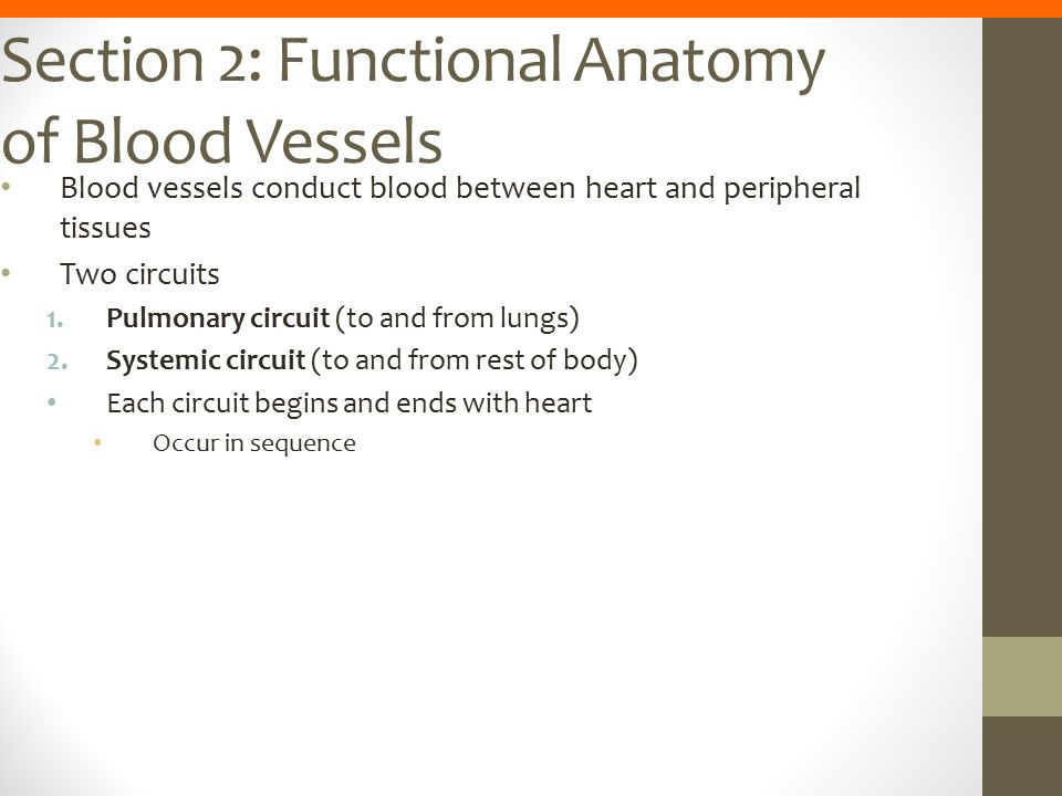 Section 2: Functional Anatomy of Blood Vessels Blood vessels conduct blood between heart and peripheral tissues Two circuits 1.Pulmonary circuit (to a
