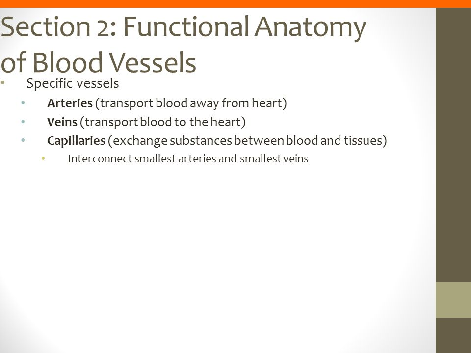 Section 2: Functional Anatomy of Blood Vessels Specific vessels Arteries (transport blood away from heart) Veins (transport blood to the heart) Capill