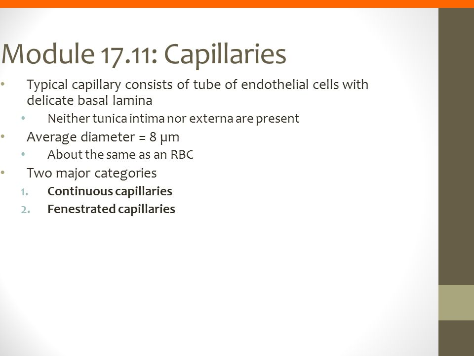 Module 17.11: Capillaries Typical capillary consists of tube of endothelial cells with delicate basal lamina Neither tunica intima nor externa are pre