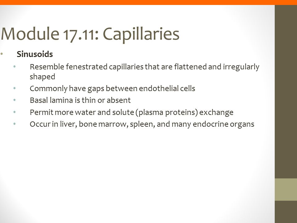 Module 17.11: Capillaries Sinusoids Resemble fenestrated capillaries that are flattened and irregularly shaped Commonly have gaps between endothelial