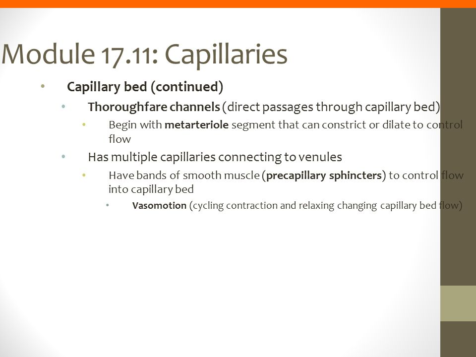 Module 17.11: Capillaries Capillary bed (continued) Thoroughfare channels (direct passages through capillary bed) Begin with metarteriole segment that