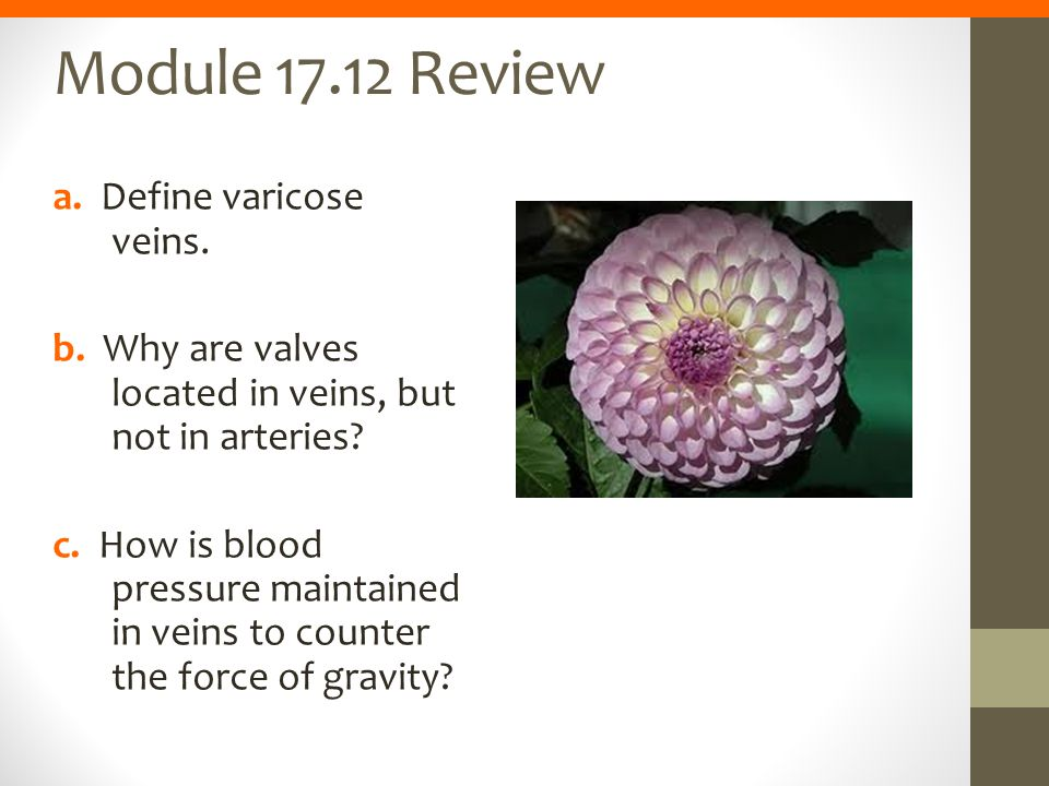 Module 17.12 Review a. Define varicose veins. b. Why are valves located in veins, but not in arteries? c. How is blood pressure maintained in veins to