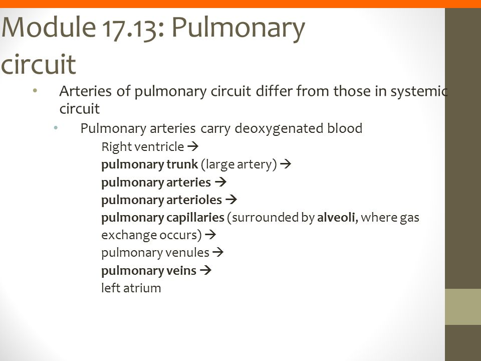 Module 17.13: Pulmonary circuit Arteries of pulmonary circuit differ from those in systemic circuit Pulmonary arteries carry deoxygenated blood Right