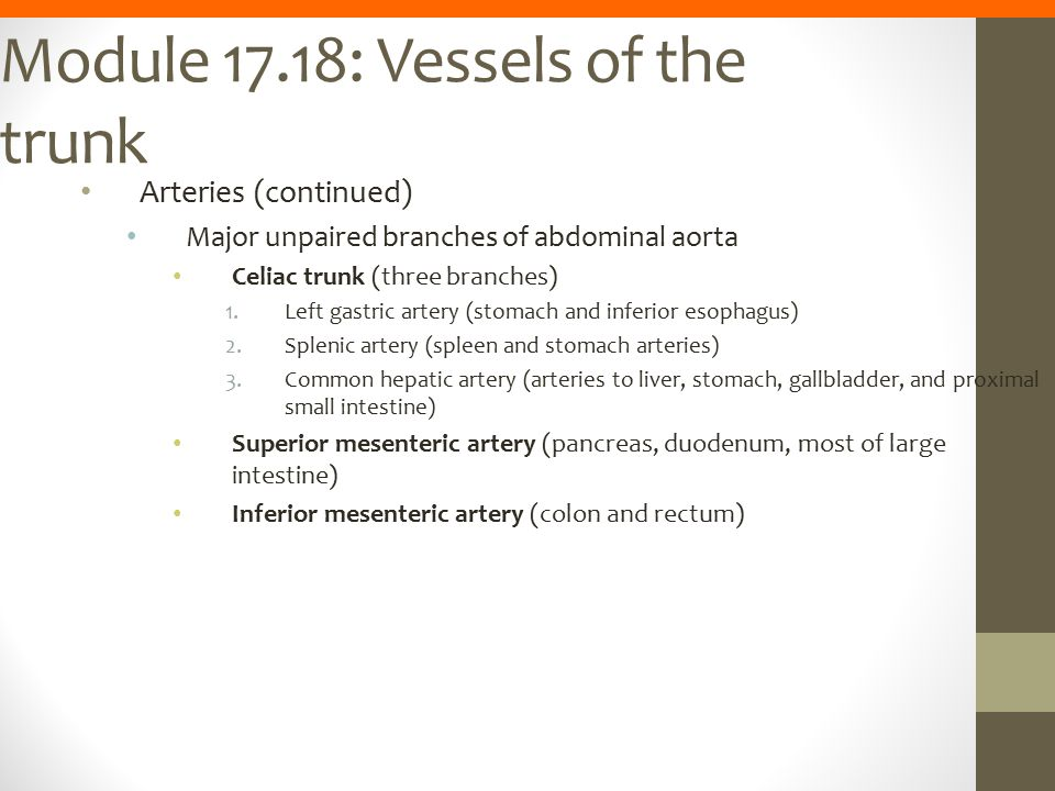 Module 17.18: Vessels of the trunk Arteries (continued) Major unpaired branches of abdominal aorta Celiac trunk (three branches) 1.Left gastric artery