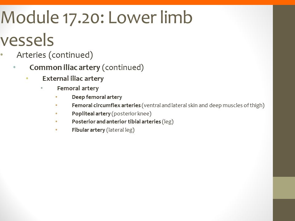 Module 17.20: Lower limb vessels Arteries (continued) Common iliac artery (continued) External iliac artery Femoral artery Deep femoral artery Femoral