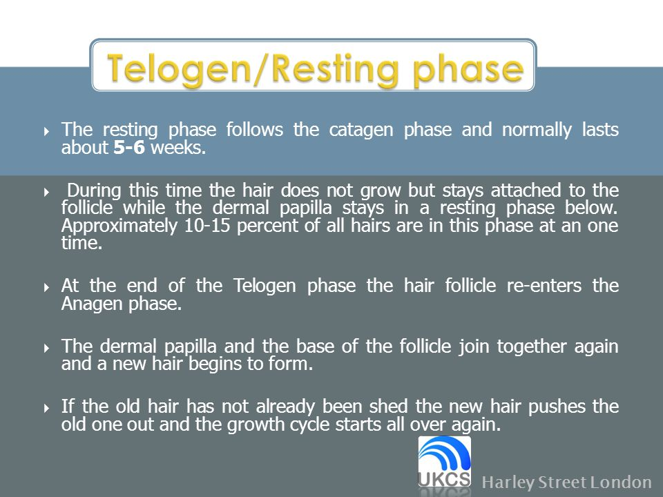  The resting phase follows the catagen phase and normally lasts about 5-6 weeks.  During this time the hair does not grow but stays attached to the