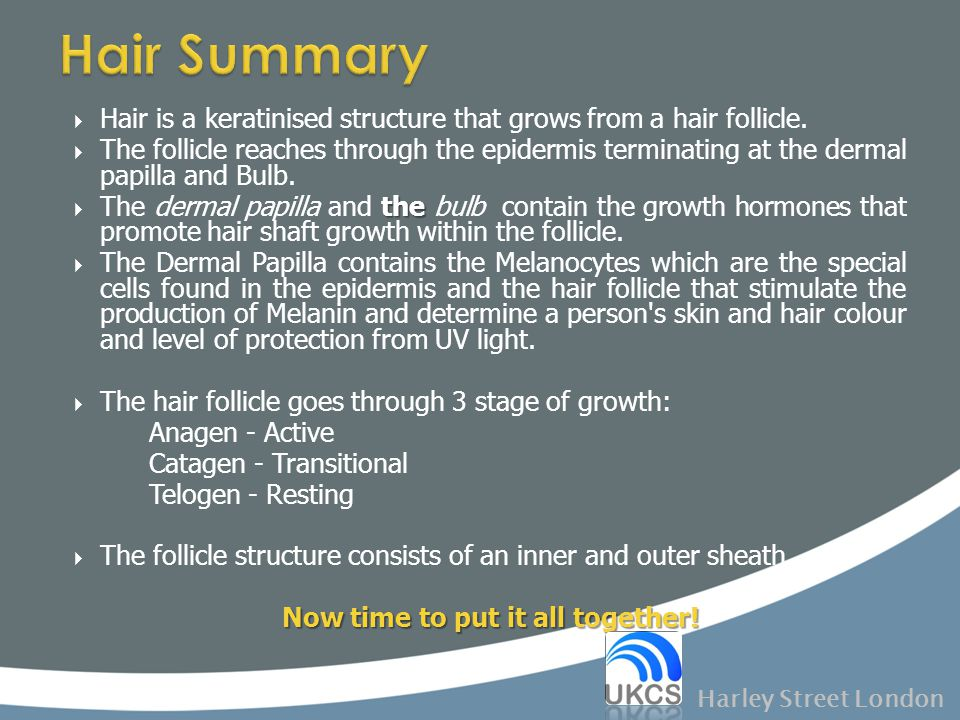  Hair is a keratinised structure that grows from a hair follicle.  The follicle reaches through the epidermis terminating at the dermal papilla and