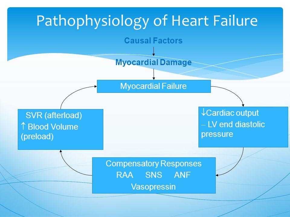 Pathophysiology of Heart Failure Causal Factors Myocardial Damage Myocardial Failure  SVR (afterload)  Blood Volume (preload)  Cardiac output  LV end diastolic pressure Compensatory Responses RAA SNSANF Vasopressin