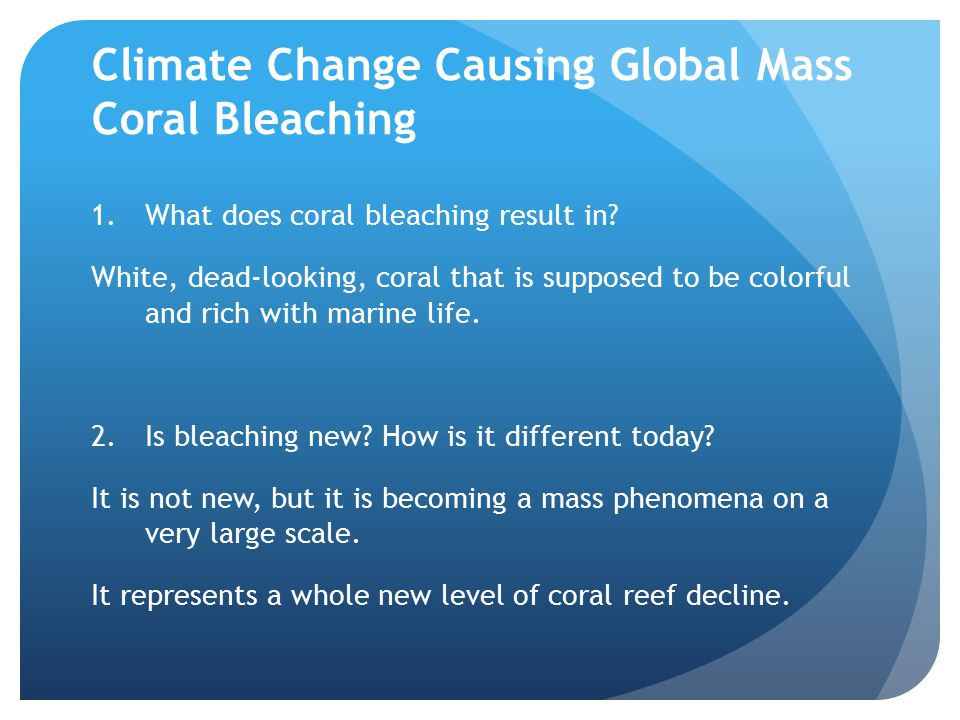 Climate Change Causing Global Mass Coral Bleaching 1.What does coral bleaching result in.