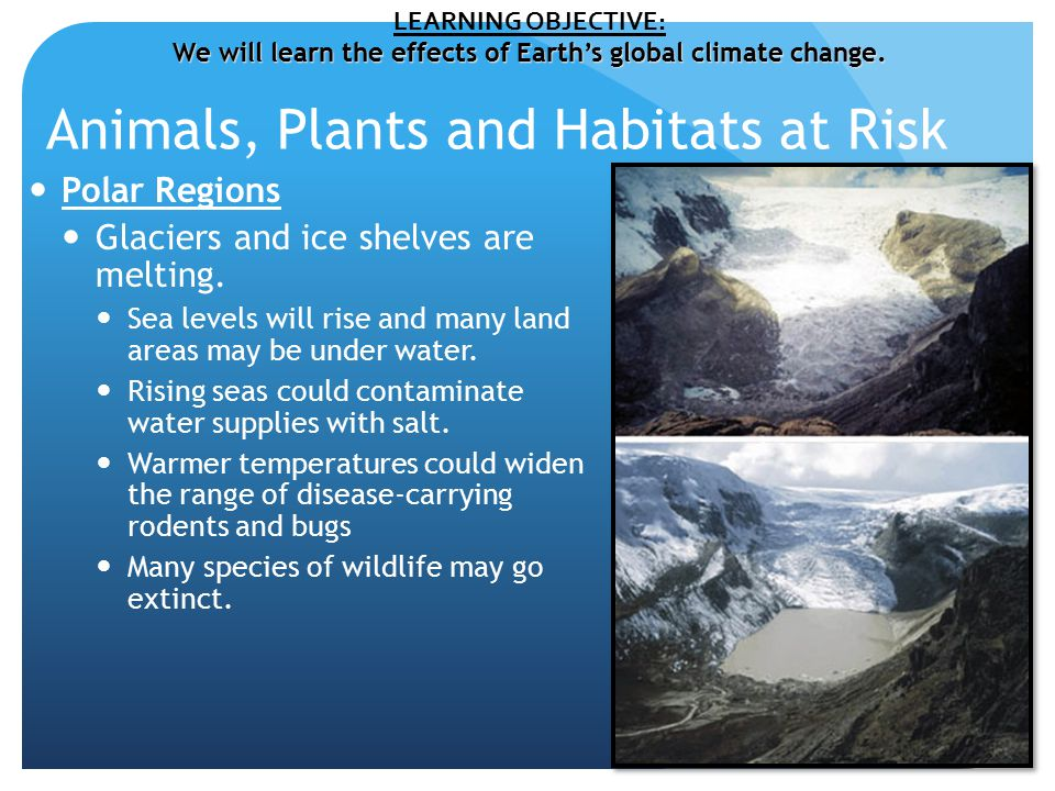 Animals, Plants and Habitats at Risk Polar Regions Glaciers and ice shelves are melting.