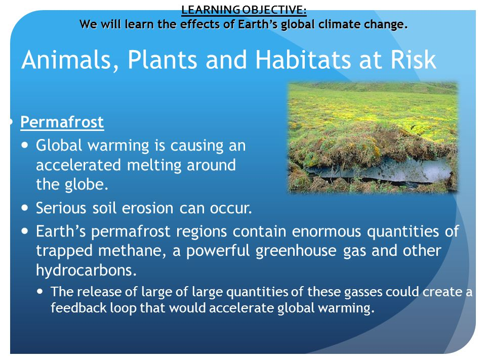 Animals, Plants and Habitats at Risk Permafrost Global warming is causing an accelerated melting around the globe.