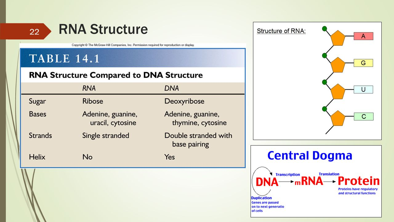 RNA Structure 22