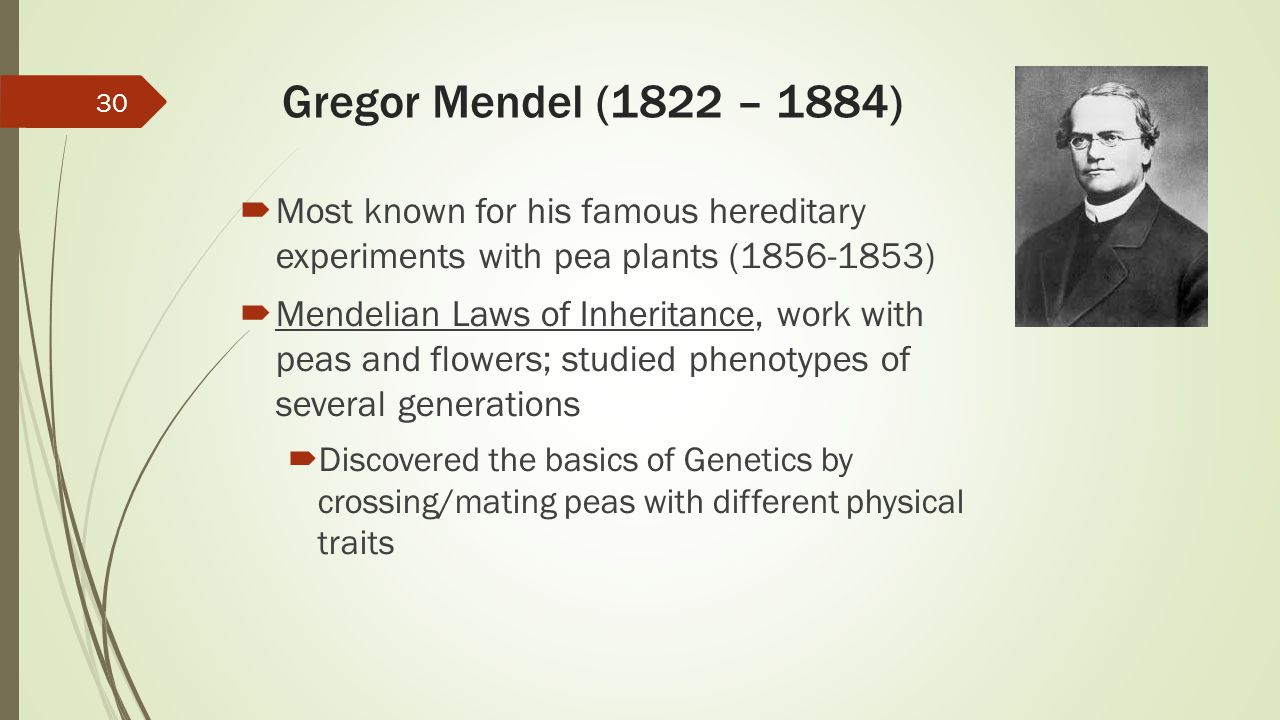 Gregor Mendel (1822 – 1884)  Most known for his famous hereditary experiments with pea plants (1856-1853)  Mendelian Laws of Inheritance, work with