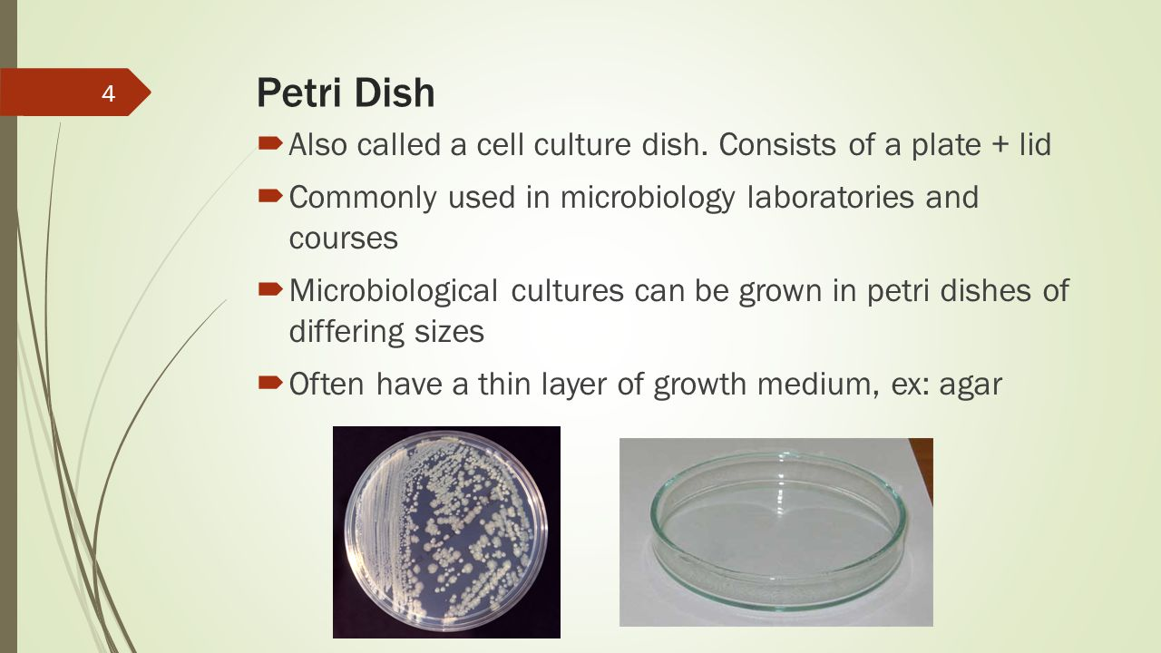 Petri Dish  Also called a cell culture dish. Consists of a plate + lid  Commonly used in microbiology laboratories and courses  Microbiological cul