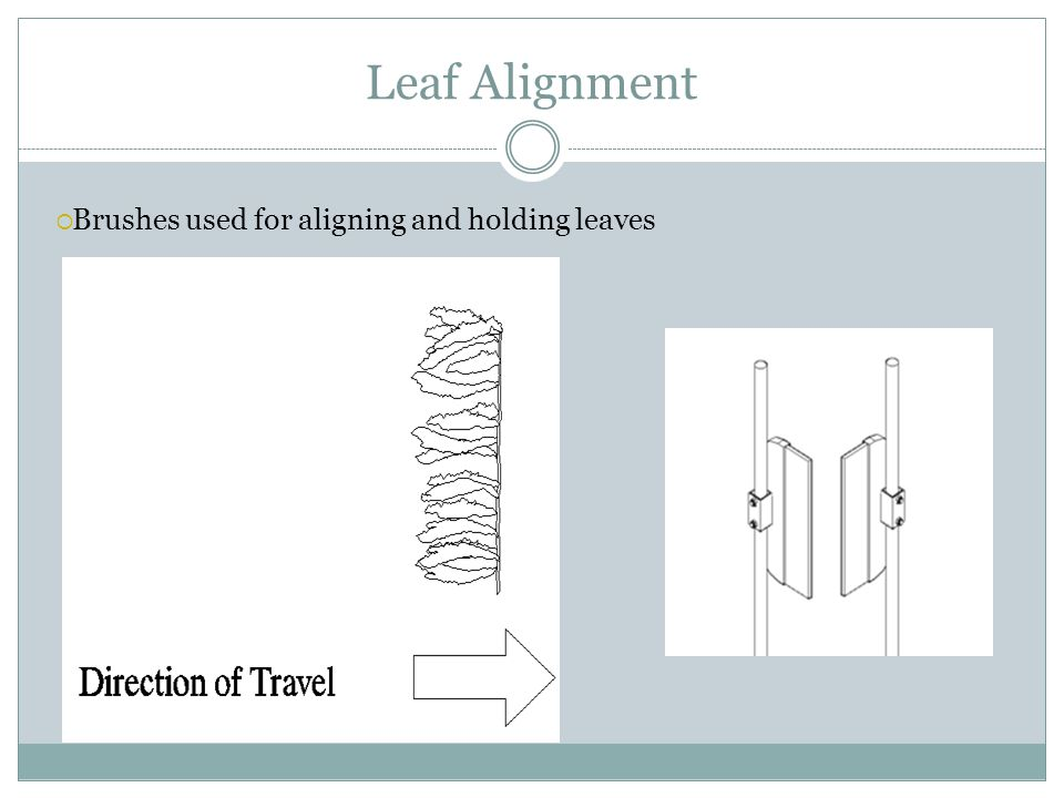 Leaf Alignment  Brushes used for aligning and holding leaves