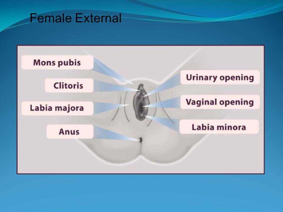 Female External