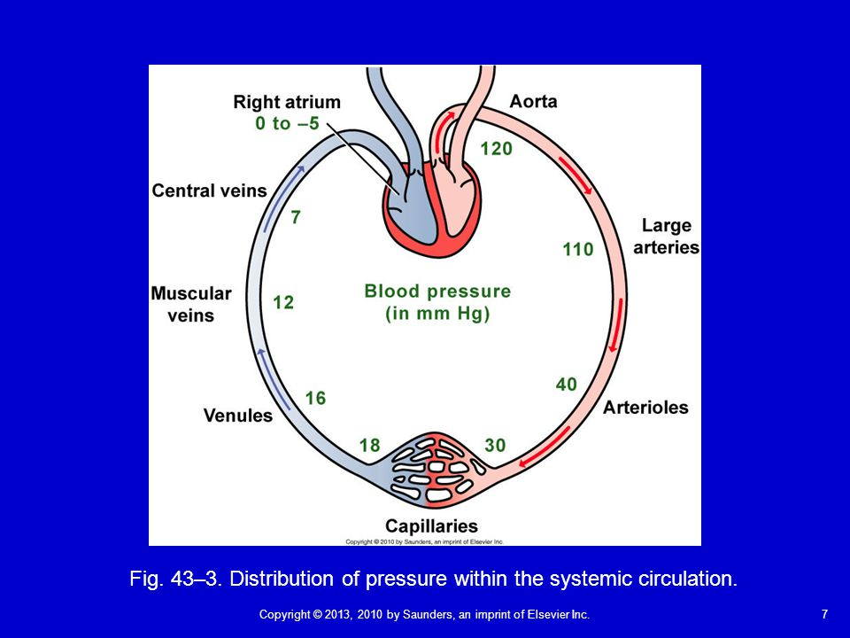 7Copyright © 2013, 2010 by Saunders, an imprint of Elsevier Inc. Fig. 43–3. Distribution of pressure within the systemic circulation.