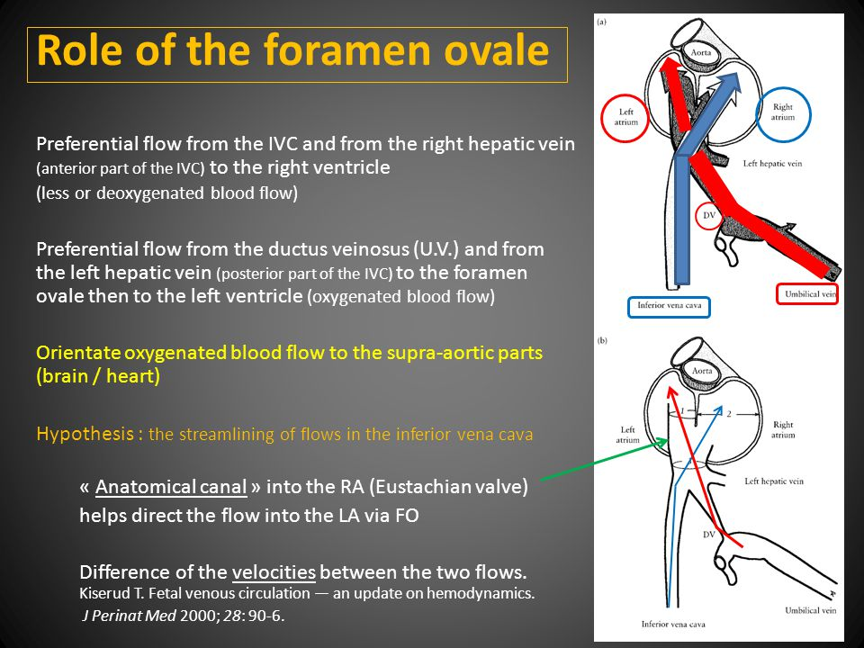 Role of the foramen ovale Preferential flow from the IVC and from the right hepatic vein (anterior part of the IVC) to the right ventricle (less or deoxygenated blood flow) Preferential flow from the ductus veinosus (U.V.) and from the left hepatic vein (posterior part of the IVC) to the foramen ovale then to the left ventricle (oxygenated blood flow) Orientate oxygenated blood flow to the supra-aortic parts (brain / heart) Hypothesis : the streamlining of flows in the inferior vena cava « Anatomical canal » into the RA (Eustachian valve) helps direct the flow into the LA via FO Difference of the velocities between the two flows.