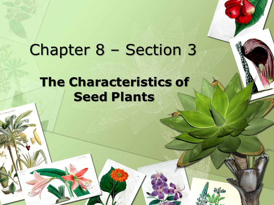 Chapter 8 – Section 3 The Characteristics of Seed Plants