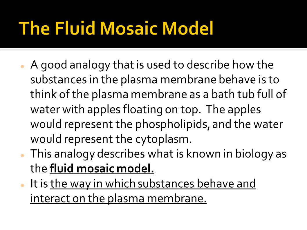 A good analogy that is used to describe how the substances in the plasma membrane behave is to think of the plasma membrane as a bath tub full of wate
