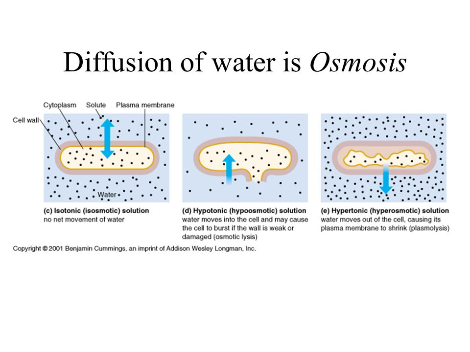 Diffusion of water is Osmosis