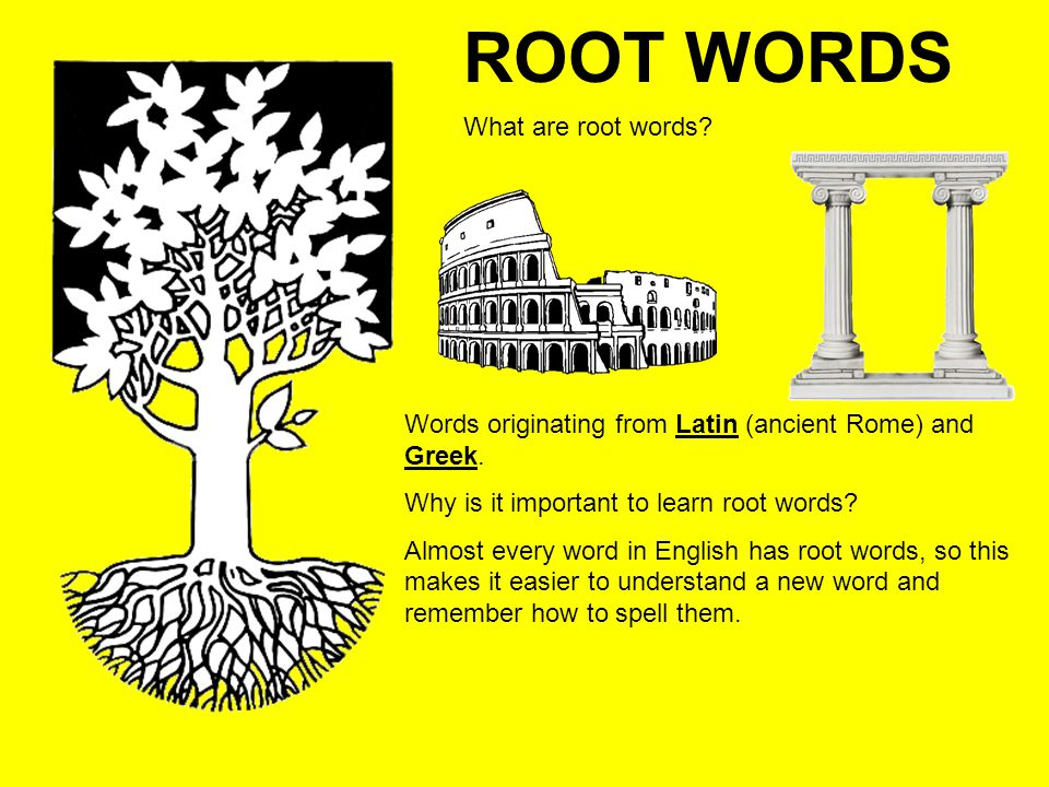 ROOT WORDS What are root words? Words originating from Latin (ancient Rome) and Greek. Why is it important to learn root words? Almost every word in E