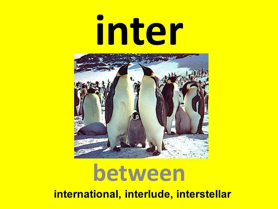 inter between international, interlude, interstellar