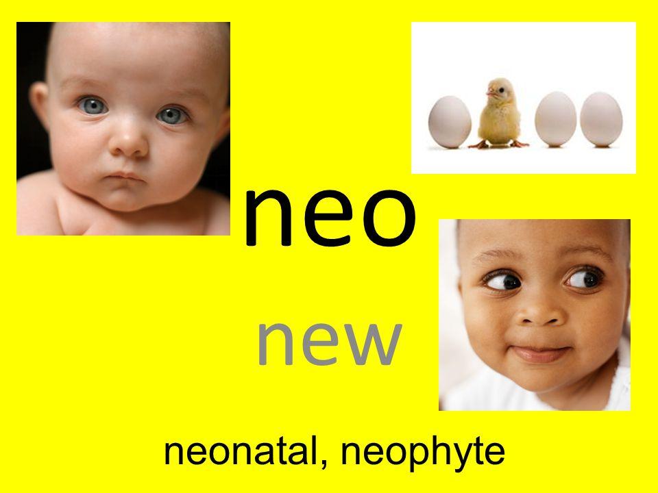 neo new neonatal, neophyte