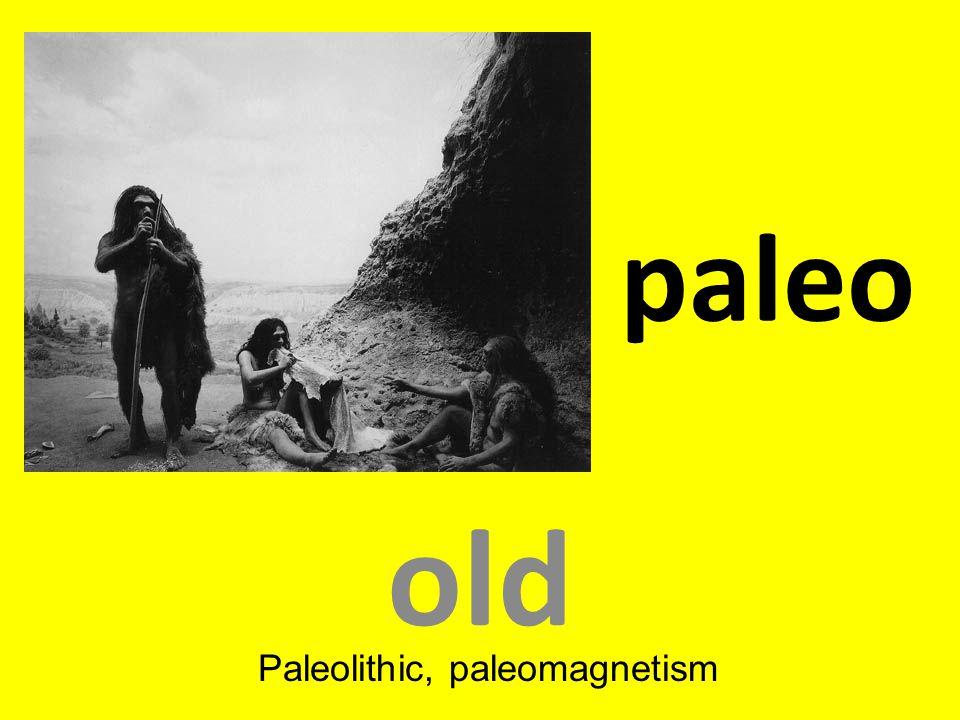paleo old Paleolithic, paleomagnetism