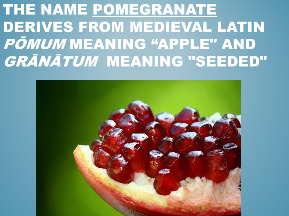 """THE NAME POMEGRANATE DERIVES FROM MEDIEVAL LATIN PŌMUM MEANING """"APPLE"""