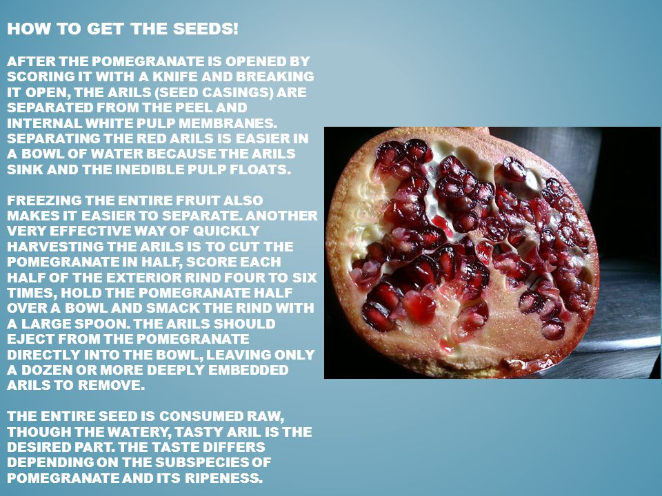 HOW TO GET THE SEEDS! AFTER THE POMEGRANATE IS OPENED BY SCORING IT WITH A KNIFE AND BREAKING IT OPEN, THE ARILS (SEED CASINGS) ARE SEPARATED FROM THE
