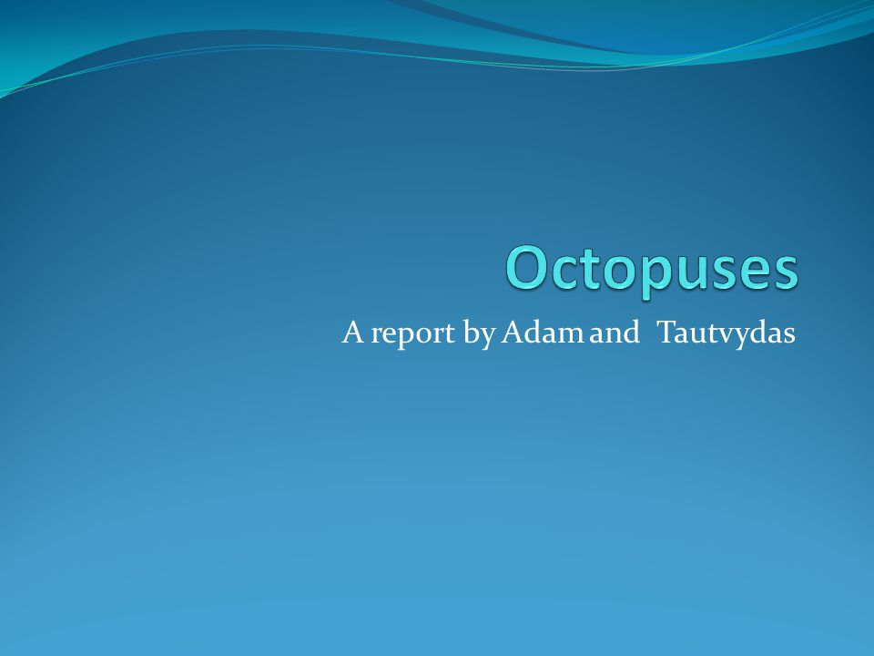 A report by Adam and Tautvydas