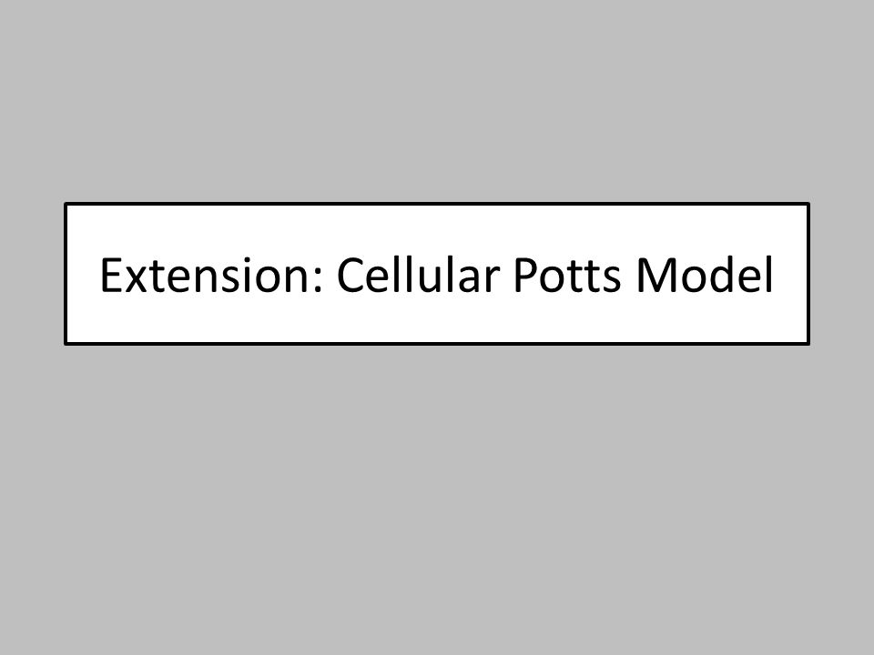 Extension: Cellular Potts Model