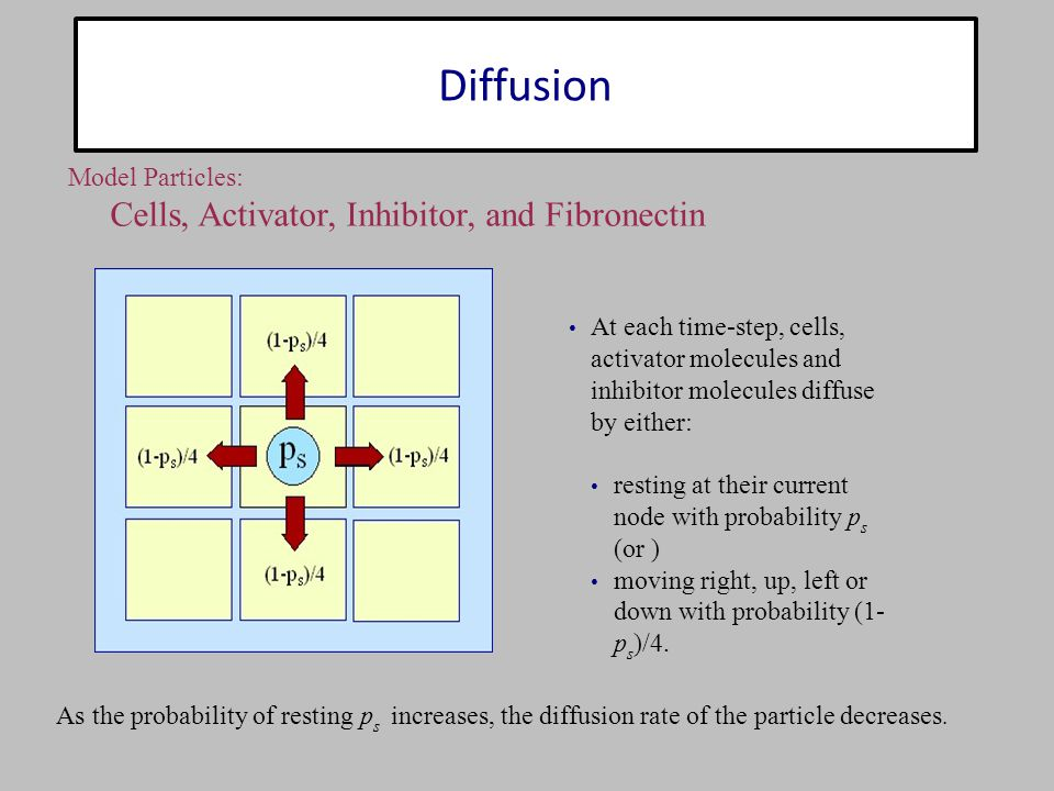 Diffusion At each time-step, cells, activator molecules and inhibitor molecules diffuse by either: resting at their current node with probability p s (or ) moving right, up, left or down with probability (1- p s )/4.