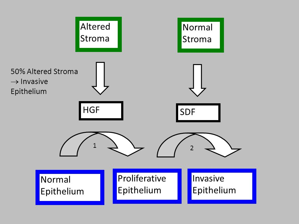 Normal Stroma Altered Stroma Normal Epithelium Proliferative Epithelium Invasive Epithelium HGF SDF 50% Altered Stroma  Invasive Epithelium 2 1