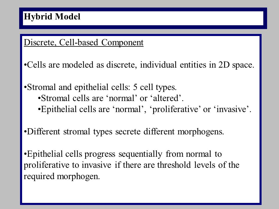 Hybrid Model Discrete, Cell-based Component Cells are modeled as discrete, individual entities in 2D space. Stromal and epithelial cells: 5 cell types