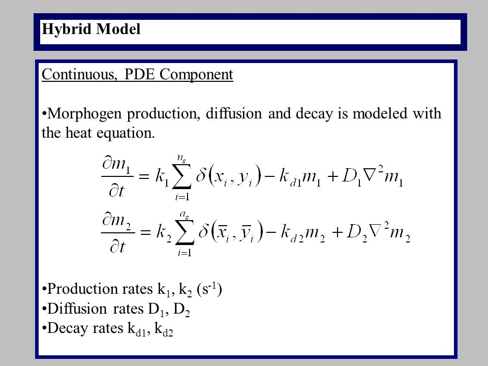 Hybrid Model Continuous, PDE Component Morphogen production, diffusion and decay is modeled with the heat equation.