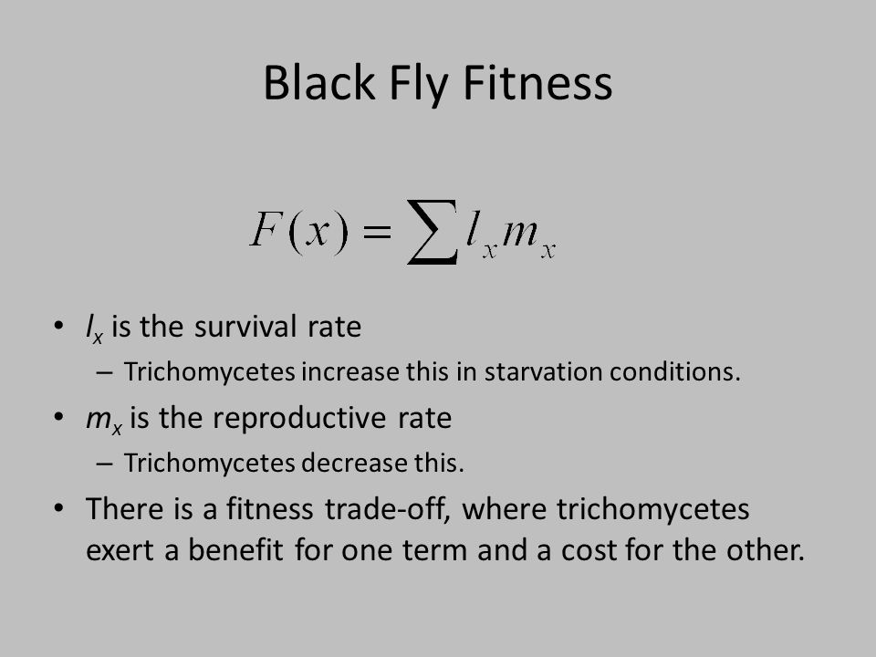 Black Fly Fitness l x is the survival rate – Trichomycetes increase this in starvation conditions. m x is the reproductive rate – Trichomycetes decrea