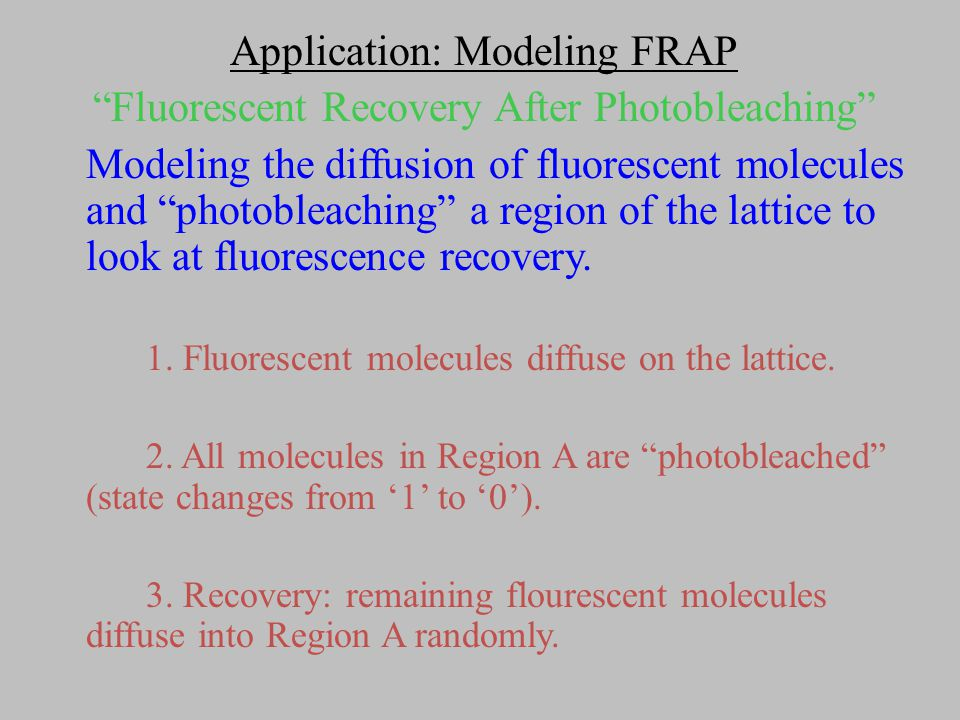 Application: Modeling FRAP Modeling the diffusion of fluorescent molecules and photobleaching a region of the lattice to look at fluorescence recovery.