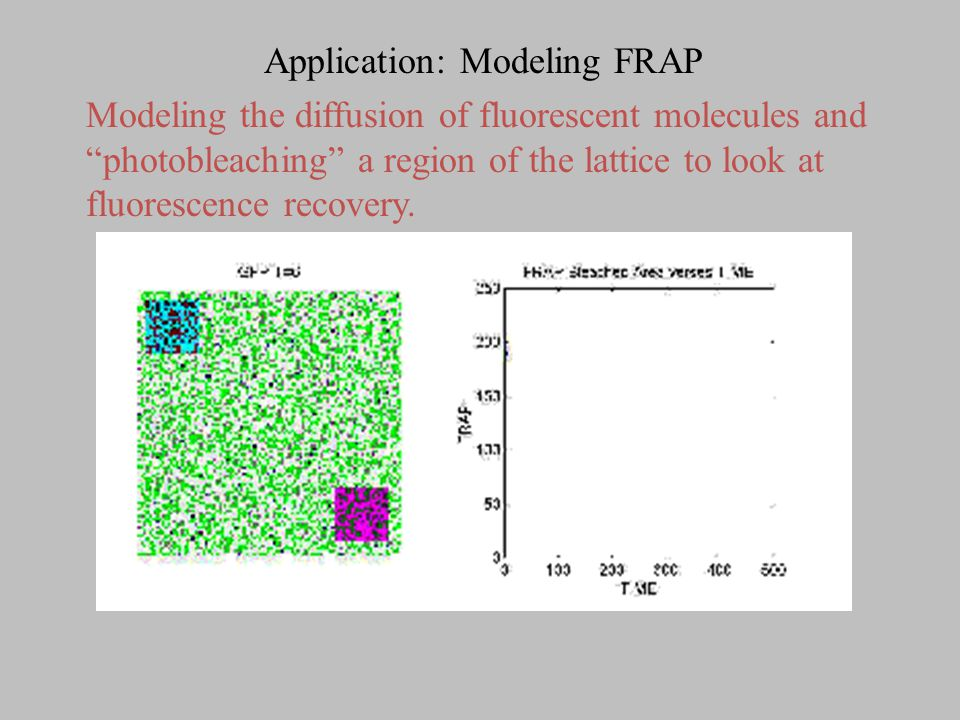 """Application: Modeling FRAP Modeling the diffusion of fluorescent molecules and """"photobleaching"""" a region of the lattice to look at fluorescence recove"""