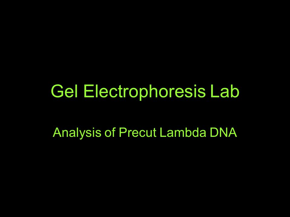 Gel Electrophoresis Lab Analysis of Precut Lambda DNA