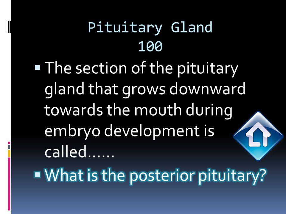 Pituitary Gland 100