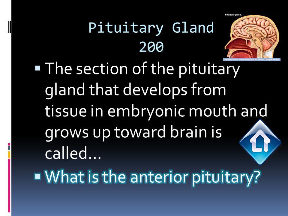 Pituitary Gland 200