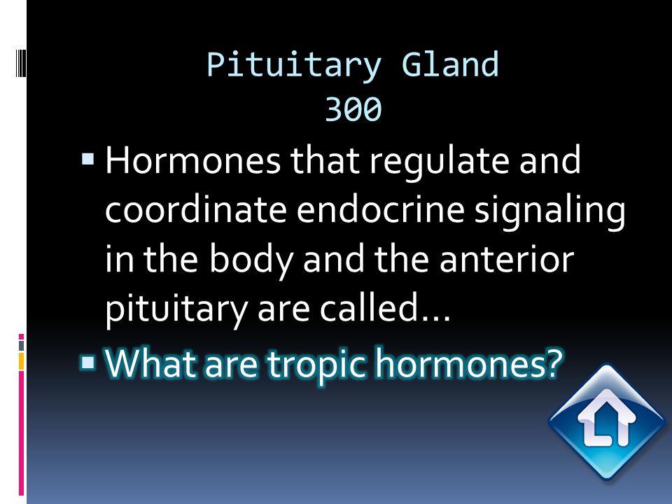 Pituitary Gland 300
