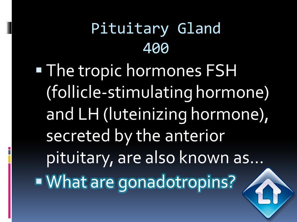 Pituitary Gland 400