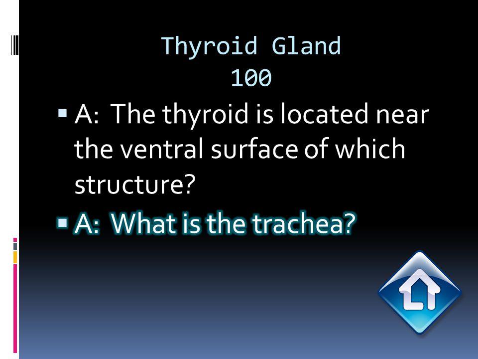 Thyroid Gland 200