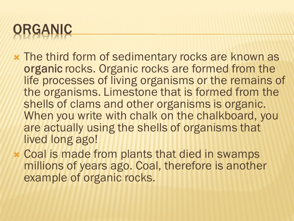  The third form of sedimentary rocks are known as organic rocks. Organic rocks are formed from the life processes of living organisms or the remains