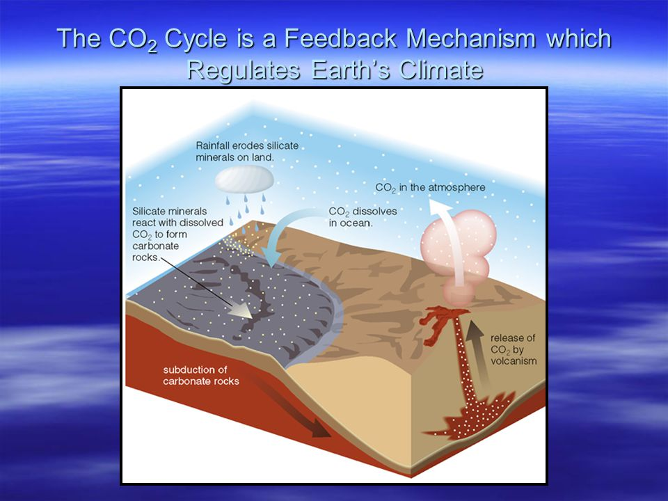 The CO 2 Cycle is a Feedback Mechanism which Regulates Earth's Climate